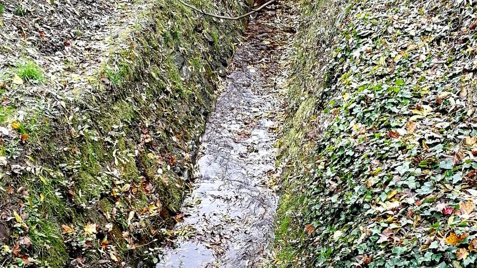 Brusnice brook,  photo: Štěpánka Budková