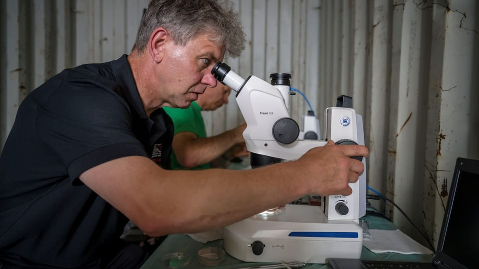 Prof. Dr. Thomas Hildebrandt of the Leibniz-IZW is searching for the oocytes,  photo: Ami Vitale