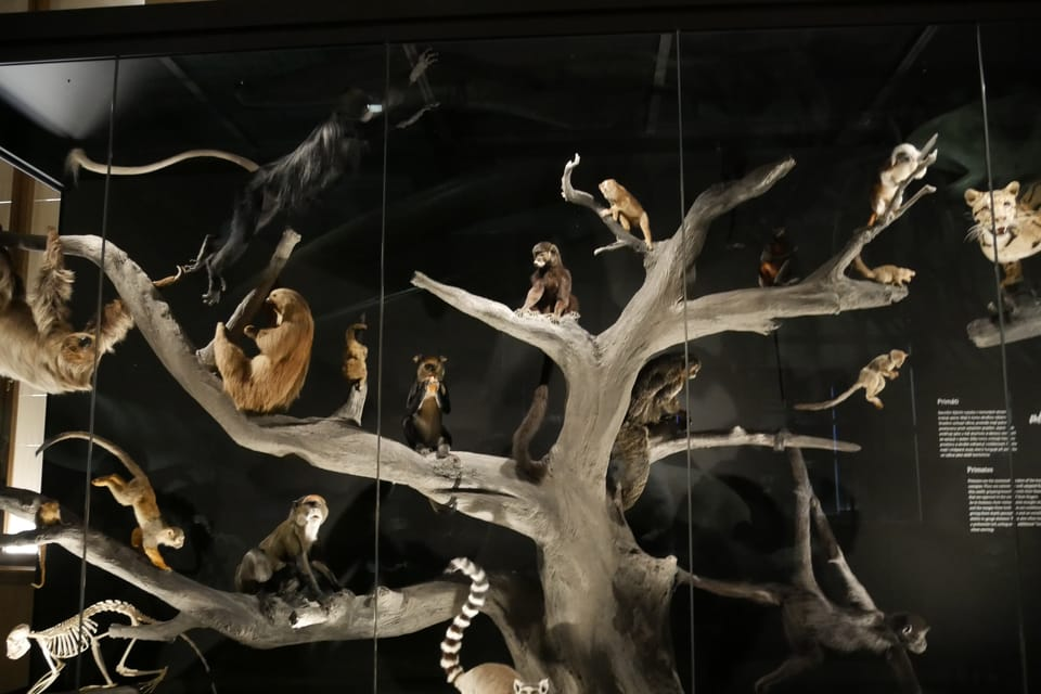 'The Miracles of Evolution' | Photo: Zoé Samin,  Radio Prague International